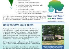 Get a Free Street Tree