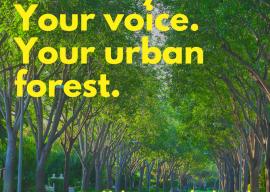 City of LA Tree Survey