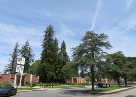 Grant High School Renovations to Uproot 48 Mature Trees