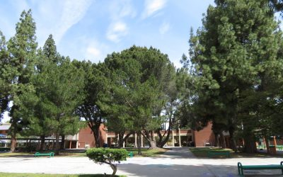 Grant High School Construction & Tree Removal Notice