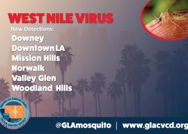 West Nile Virus Detected in Valley Glen